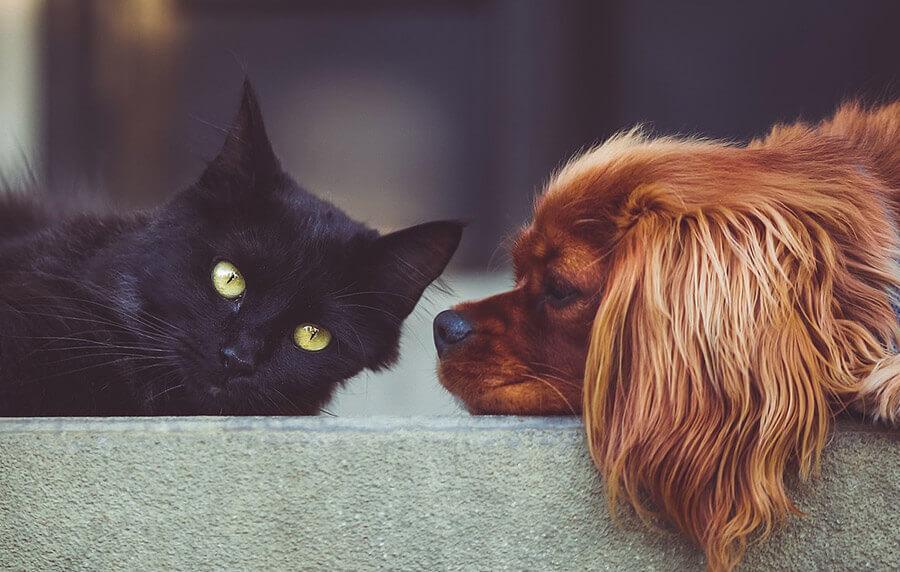 Одамна сонуваш да имаш свое милениче? Погледни што сè те очекува...
