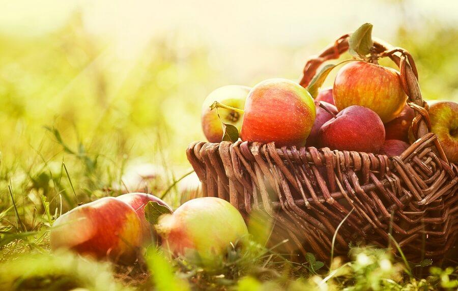 Есенски активности кои мора да ги пробаш!