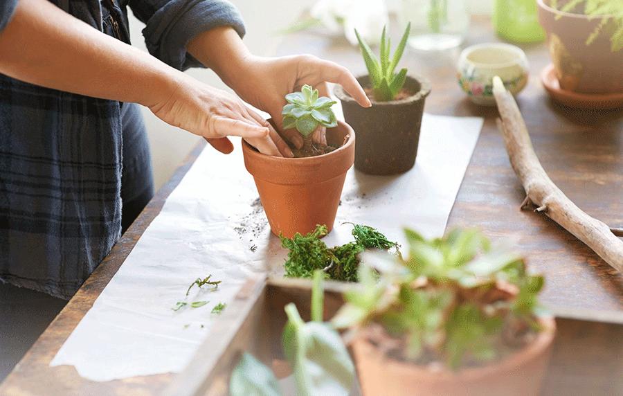 Април – месец на градинарството и декорацијата.